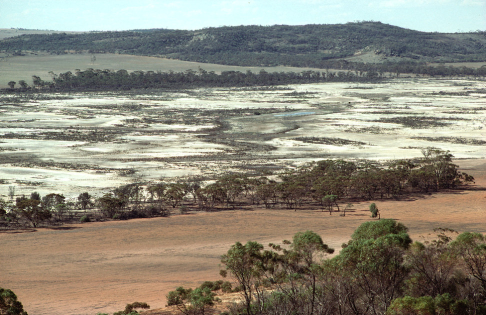 """""""Valley of Salt"""" - Salinity in the Western Australian wheatbelt near Bruce Rock, WA."""